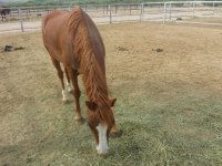 Gelding transport from CO to AZ