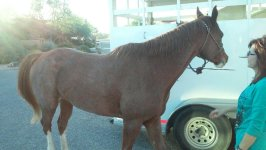 Horse transport from AZ to MT
