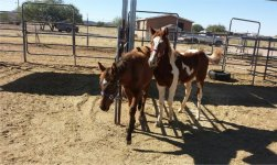 2 horse transport from OK to AZ