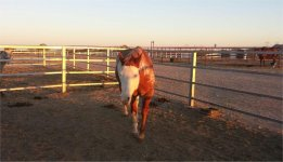 Horse transport from OR to TX 1