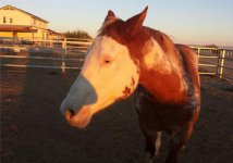 Horse transport from OR to TX 2