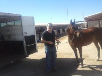 another horse transport from AZ to AZ