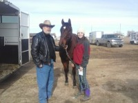 horse transport CA to WY