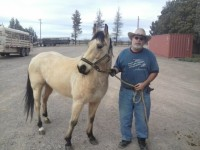 horse transport CO to NM