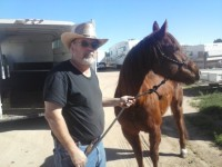 horse transport NE to AZ