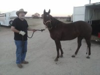 another horse transport NE to TX