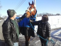 horse transport OK to OH