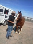 horse-transport-TN-AZ